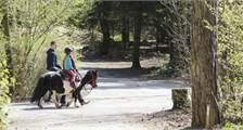 Pony ride at Center Parcs Het Meerdal